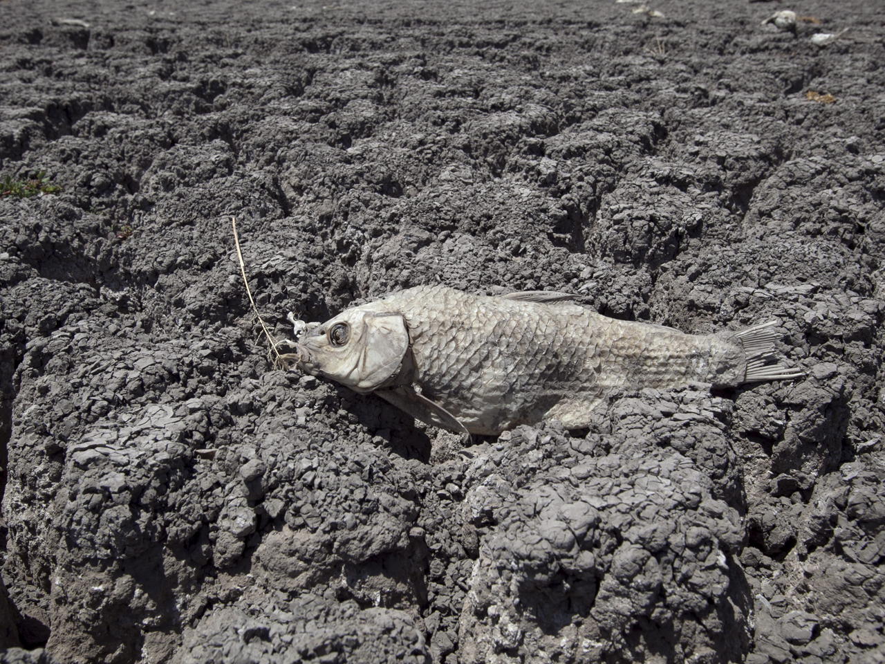 Texas Plains May Languish In Drought Until 2012 Cbs News