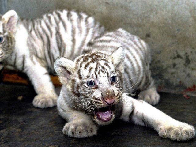 Rare albino animals - ...