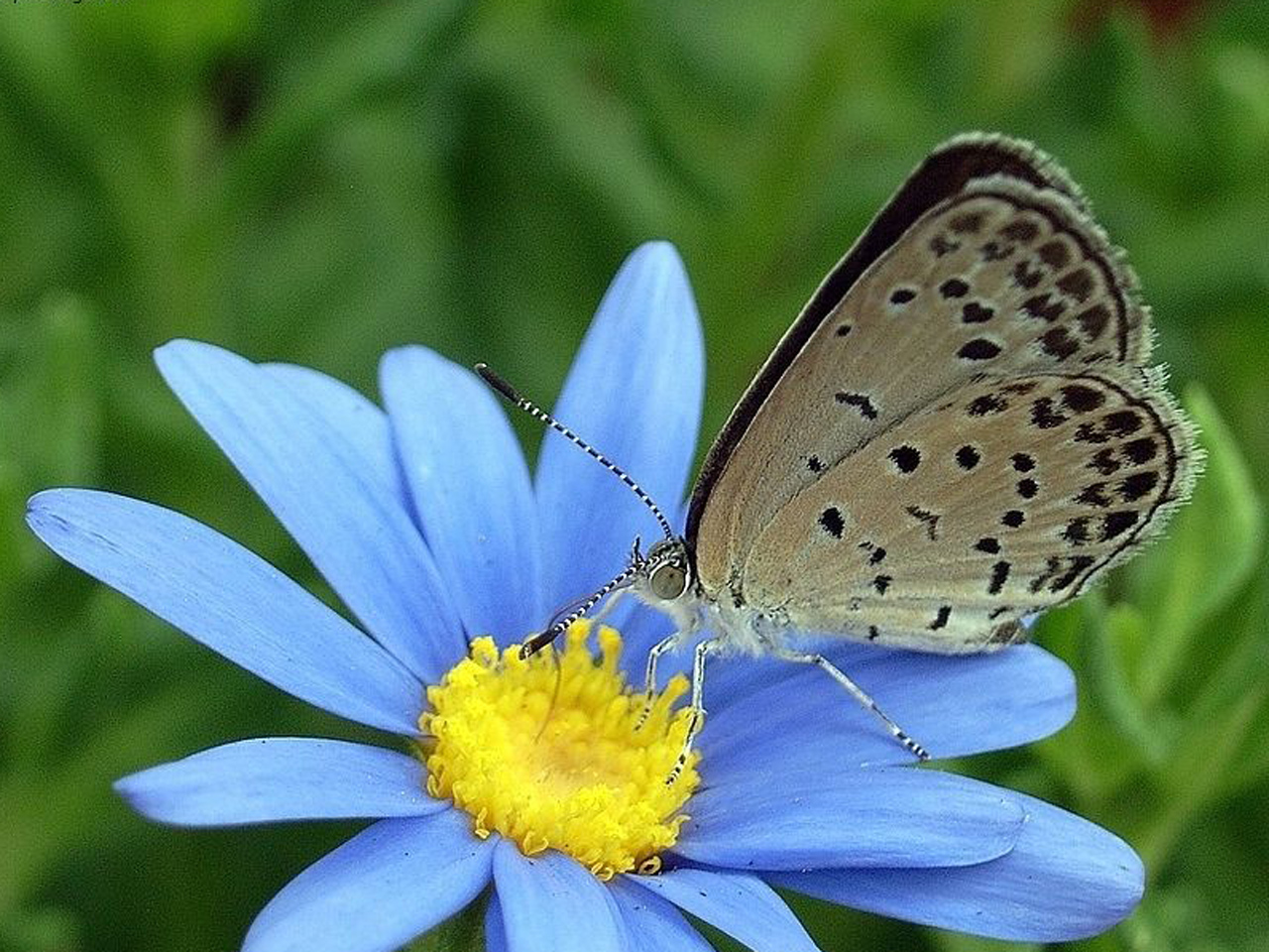 Report: Mutated Butterflies Found Near Fukushima