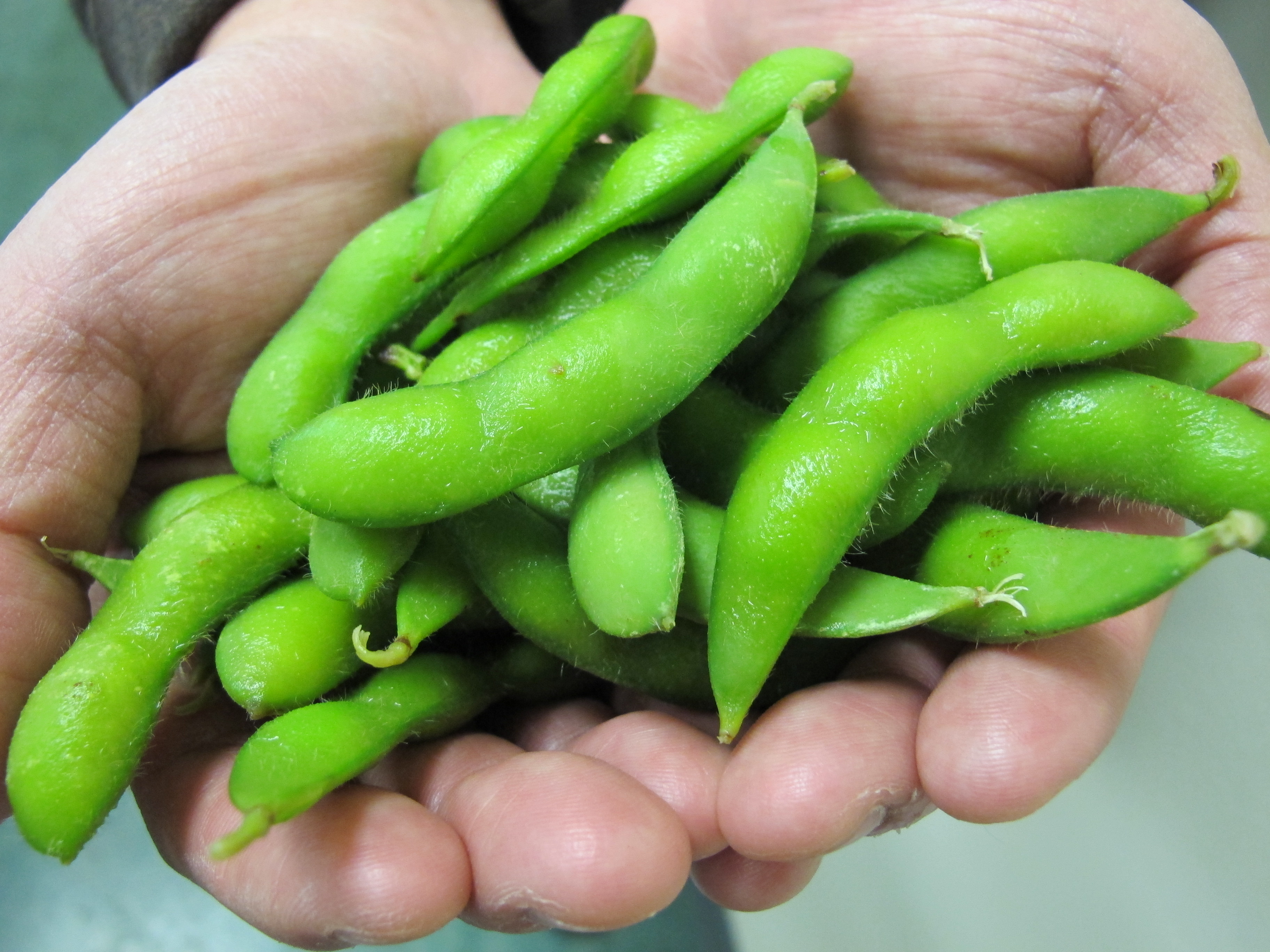 Vegetable Seeds | Soy Bean Seeds | Soy Bean Edamame |One Edamame Plant