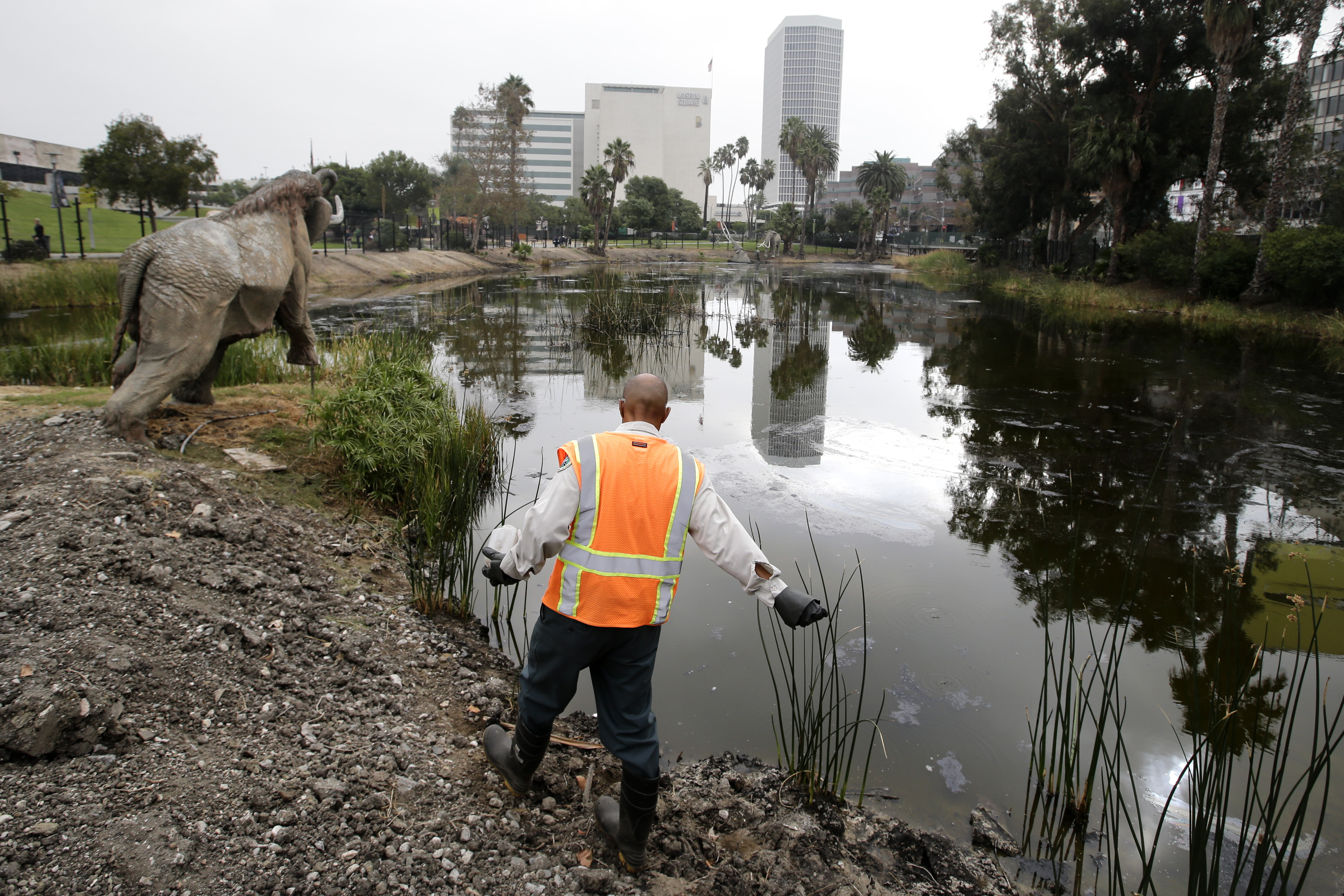 Scientists dig for fossils at the La Brea Tar Pits in L.A ...