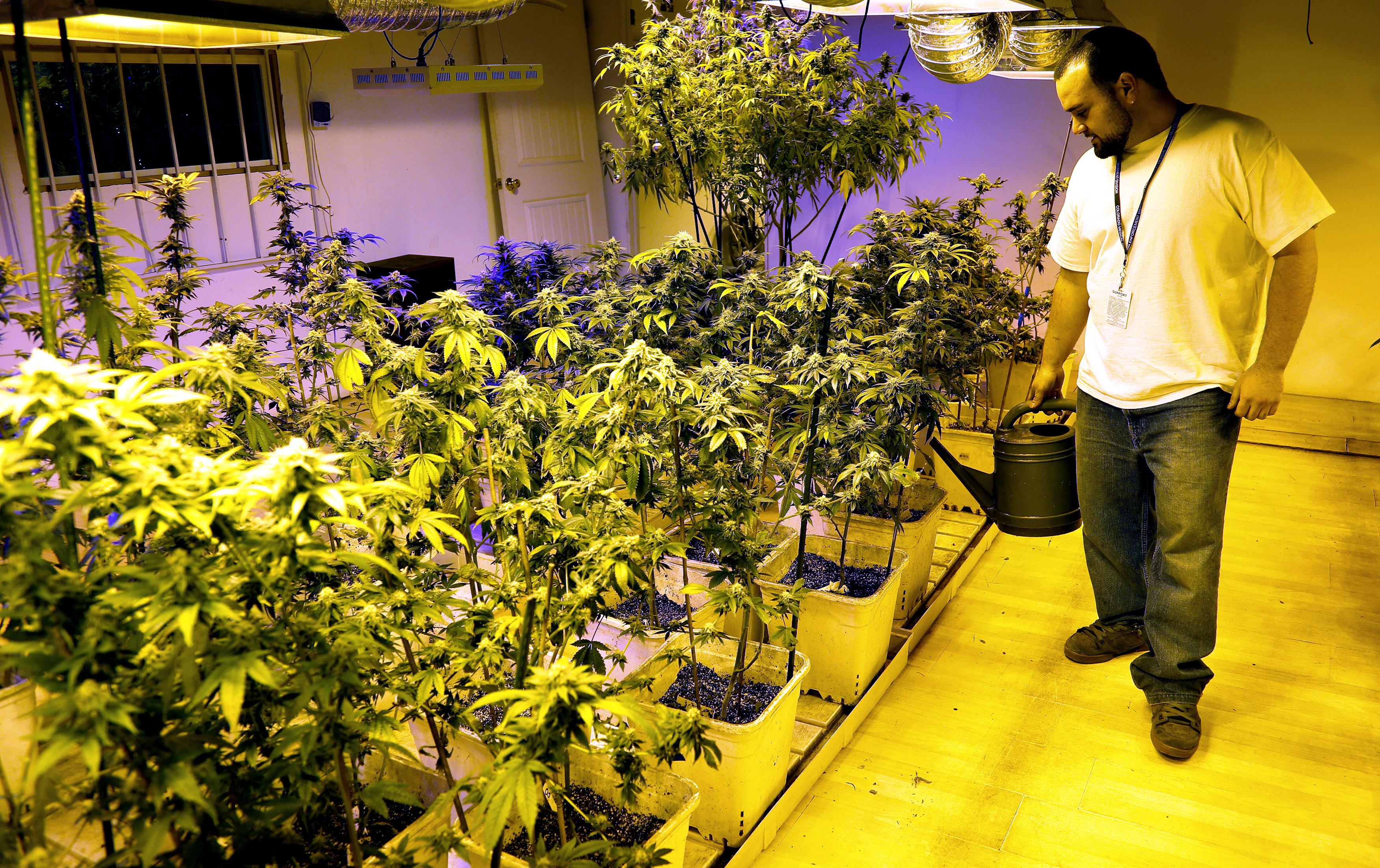 Denver Recreational Pot Shops Open In Colorado