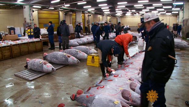 tokyo-fish-market-620.jpg