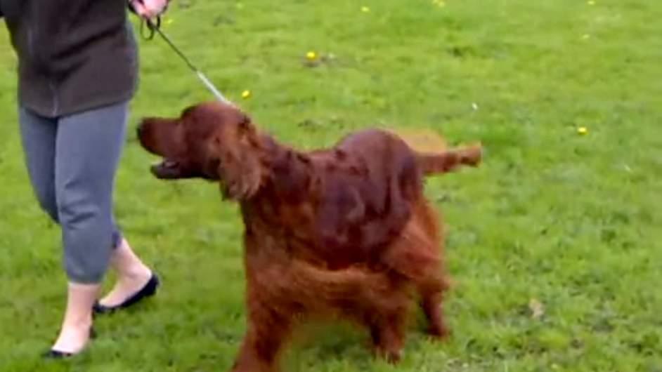 Crufts Dog Show Poisoning