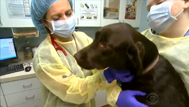 Coughing canines? 6 things to know about dog flu