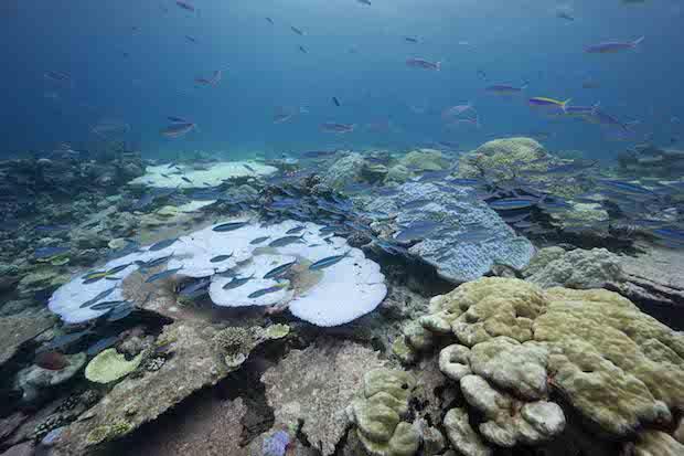 coral-reefs3.jpg