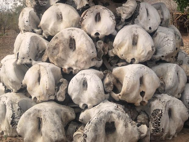 niassa-reserve-elephant-memorial-mariri-concession-alastair-nelson-w.jpg