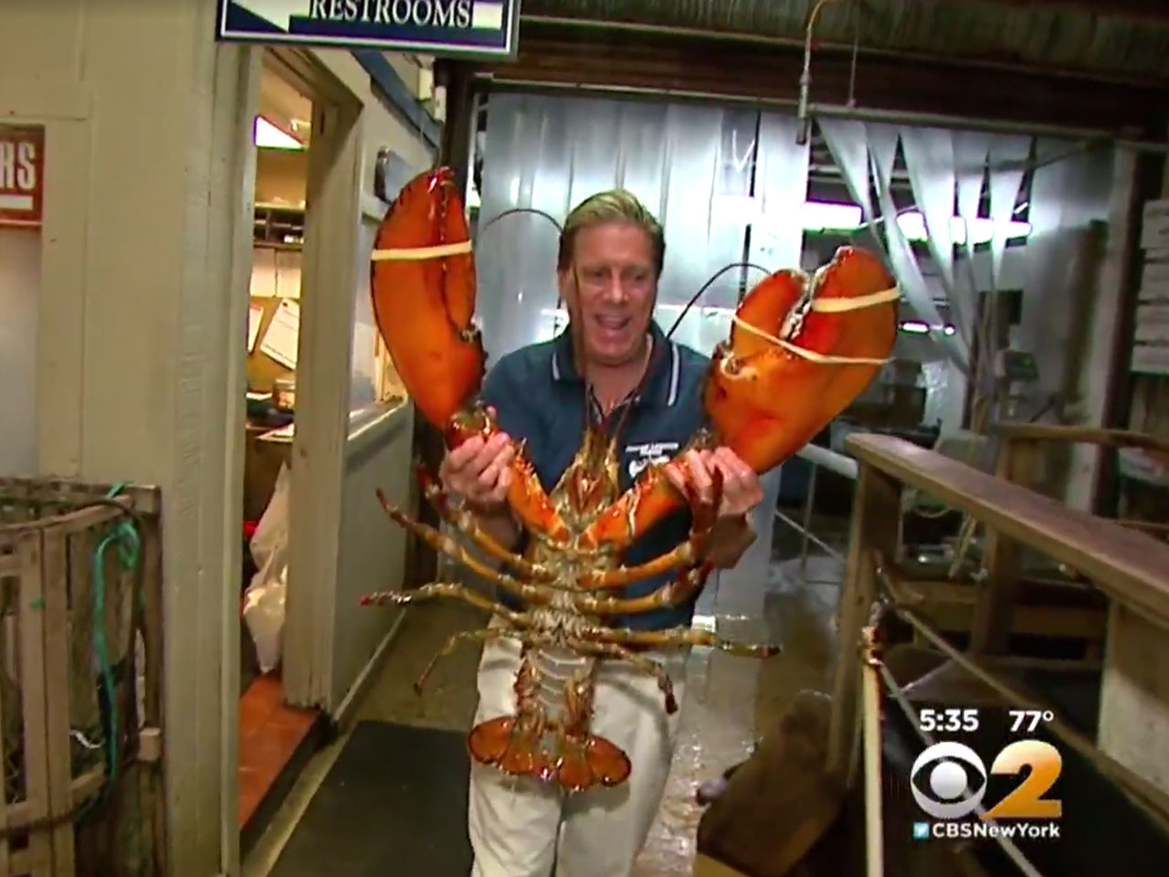 95-year-old lobster featured at Long Island, New York ...
