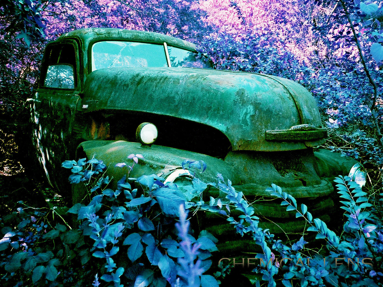 Sell Junk Cars >> Rotting Art - A museum of junked cars - Pictures - CBS News