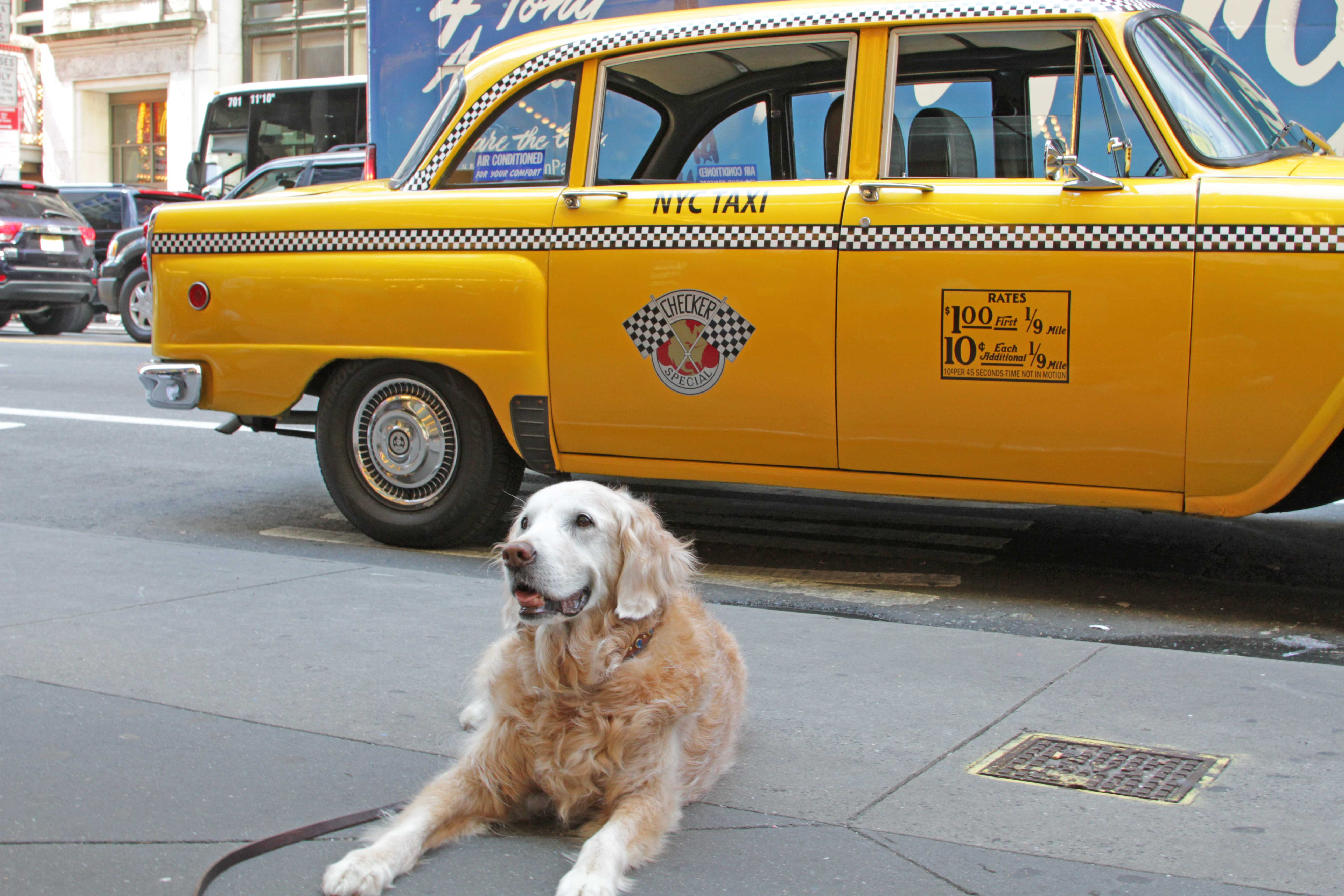Imgweb Dogs Of September 11th