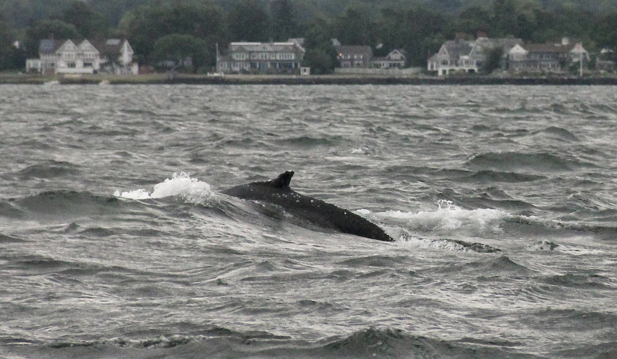 whales return to long island sound after twodecade hiatus
