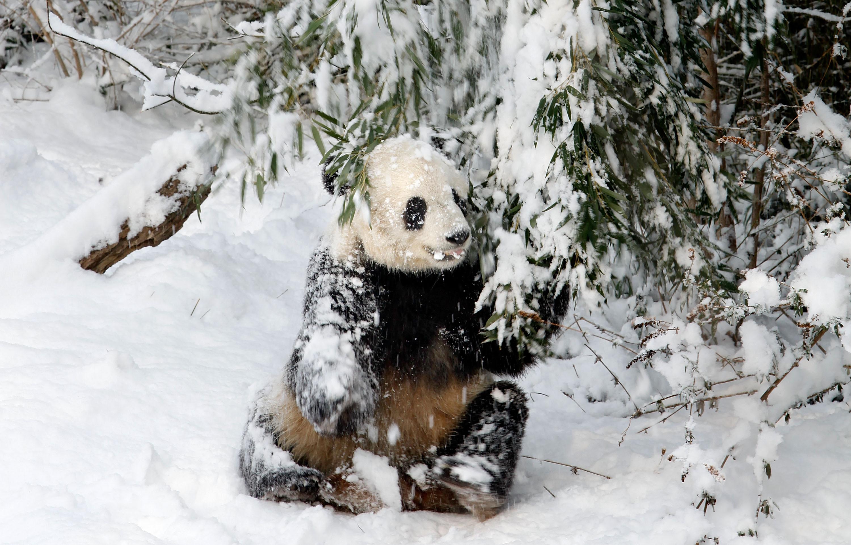 animals made of snow - photo #47