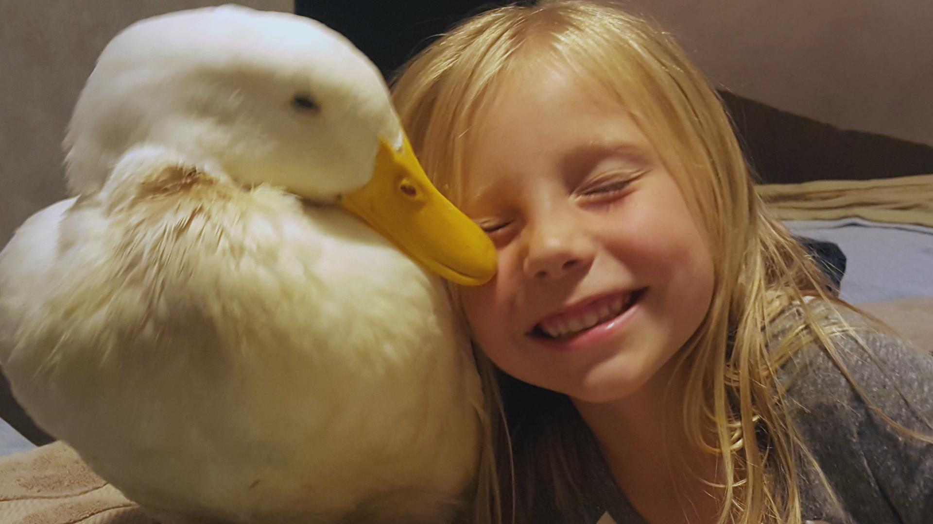 girl forms unbreakable bond with her pet duck   cbs news