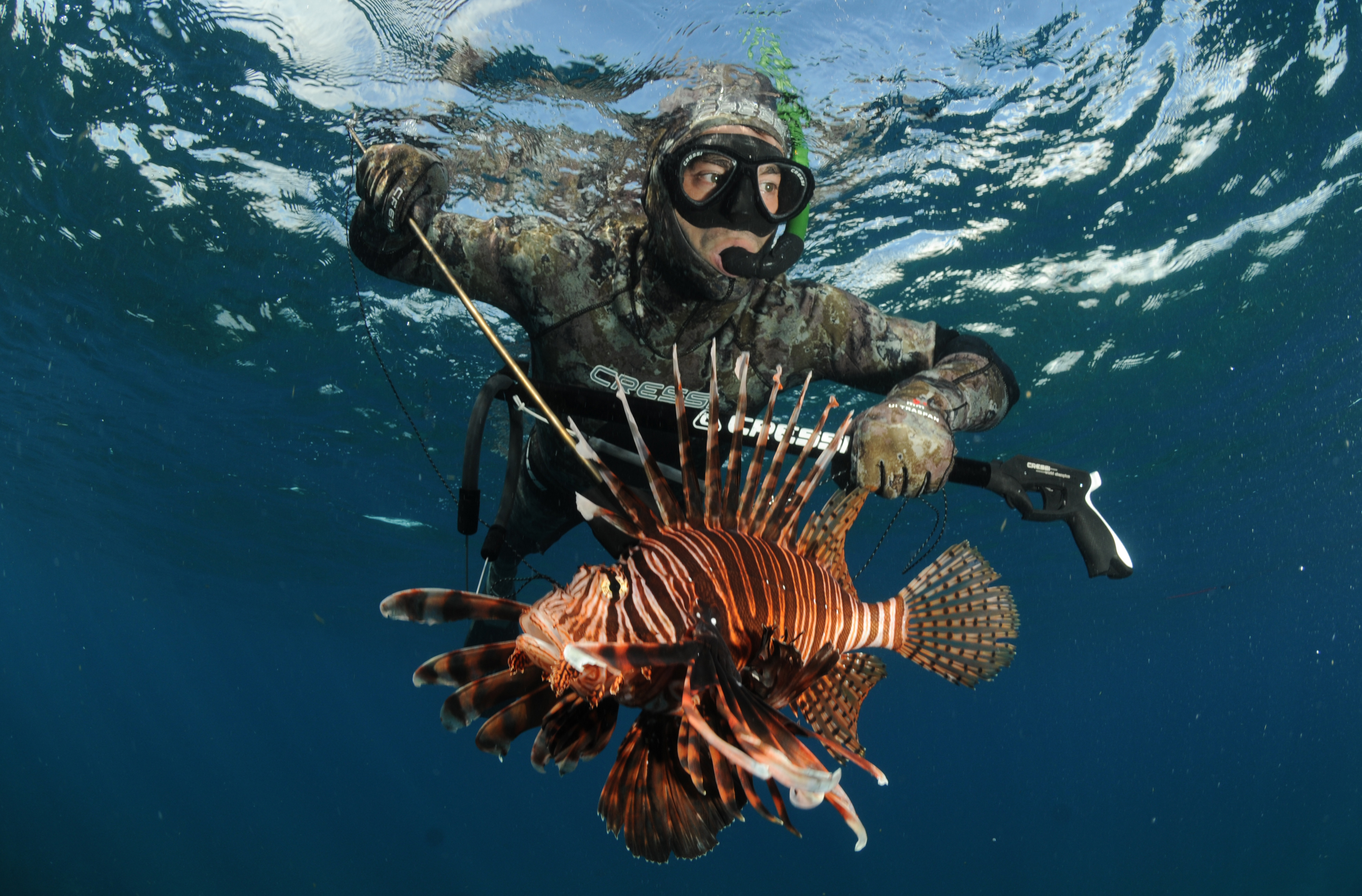 Florida Wages War On Lionfish That Is Its Harming