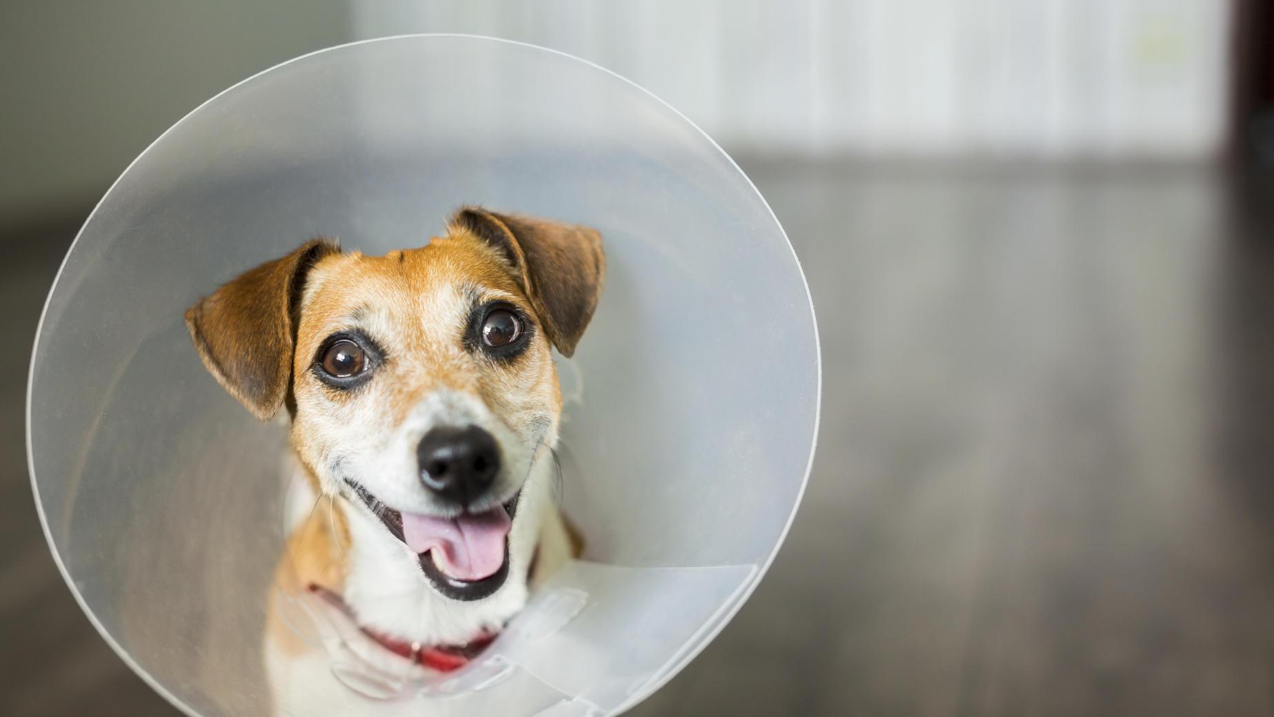 cheap veterinarian