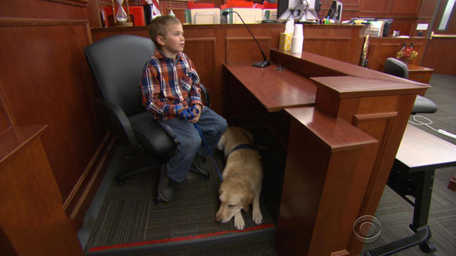 Service dog, Pella at work in Colorado courtroom (Photo courtesy of CBS)
