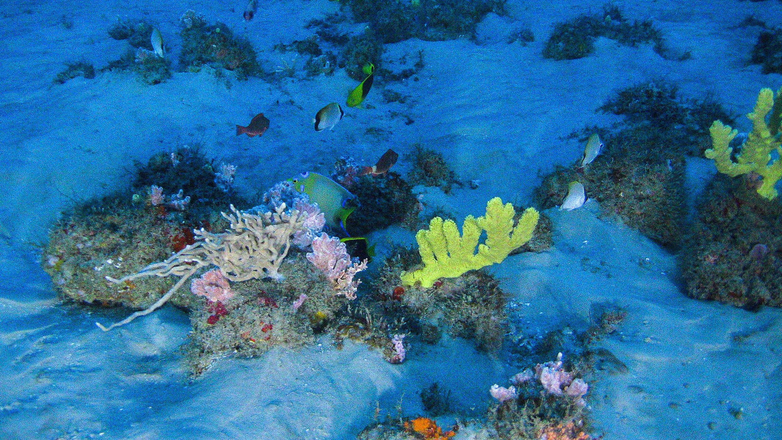 amazon reef amazing amazon reef pictures cbs news