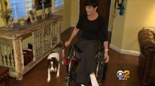 Woman Kicked Out Of Ailrine Lounge Because Of Service Dog