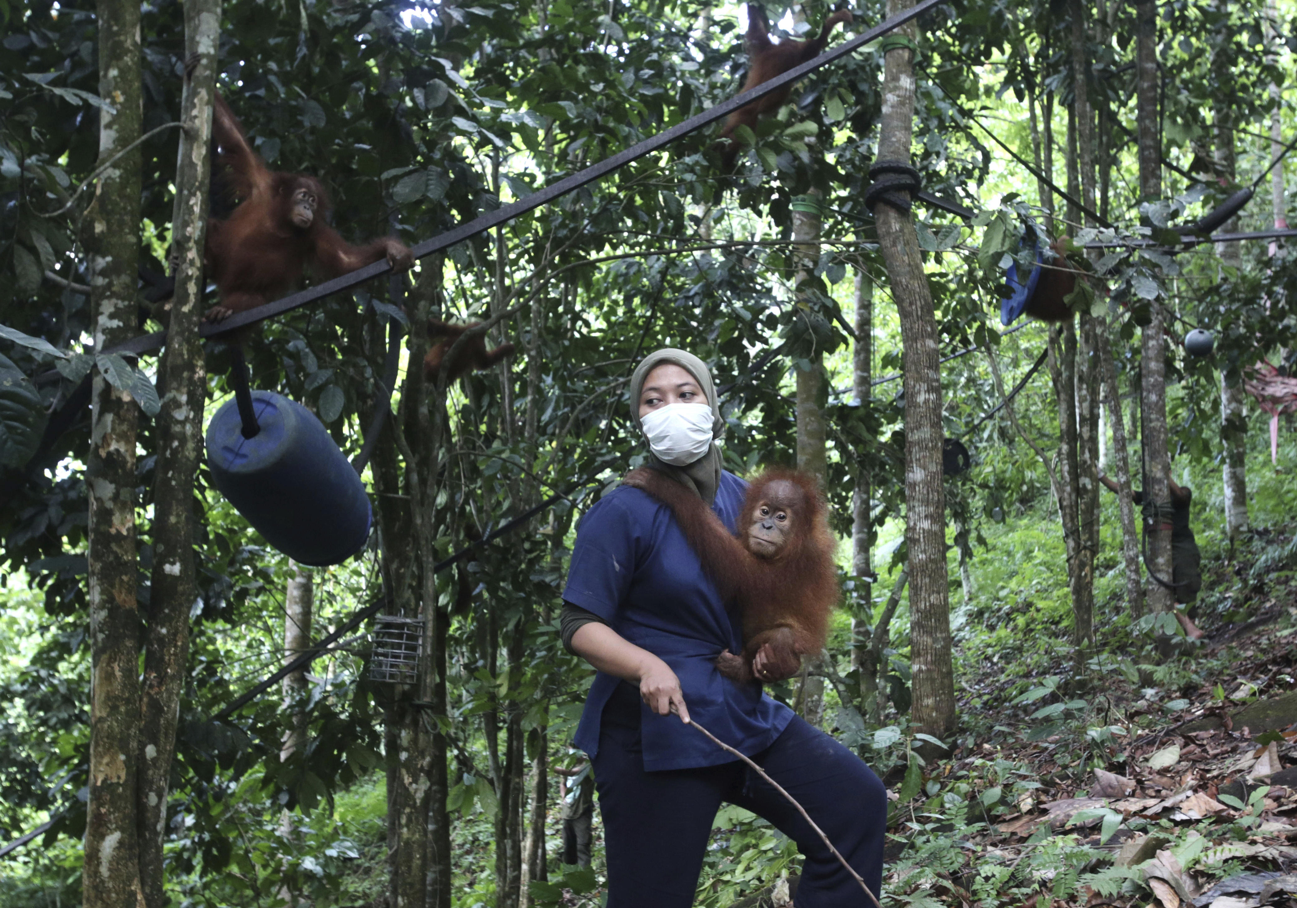 Orangutan sanctuary occupied by humans