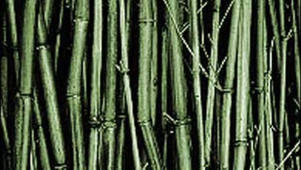 Lots you can do with bamboo cbs news for What can you do with bamboo