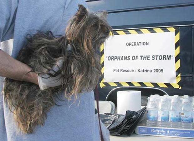 Katrina's Critters III