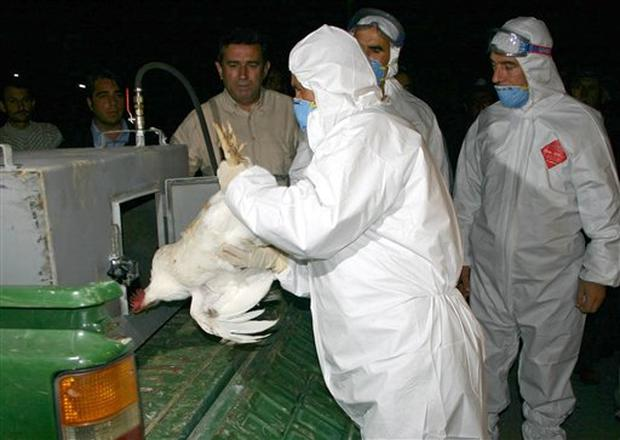 2005 Bird Flu