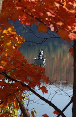 Fall's Finery