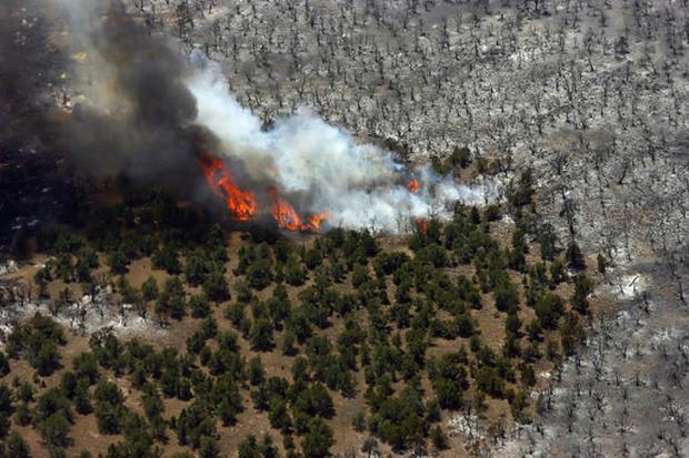 Wildfires Char Western U.S.