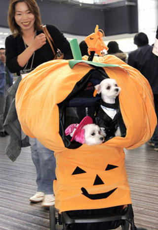 Costumed Critters