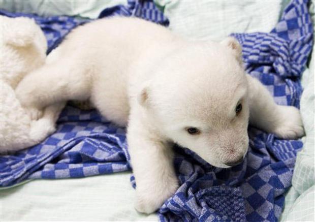 Fluffy Flocke