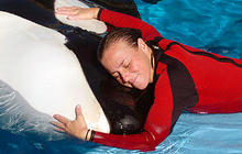 Dawn Brancheau SeaWorld Trainer Killed