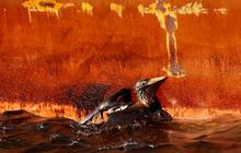 Oil Spill Threatens Wildlife