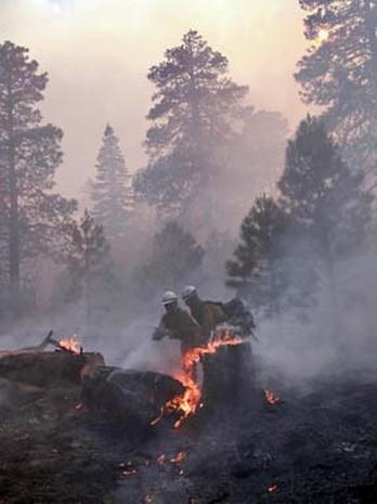 Arizona Wildfire
