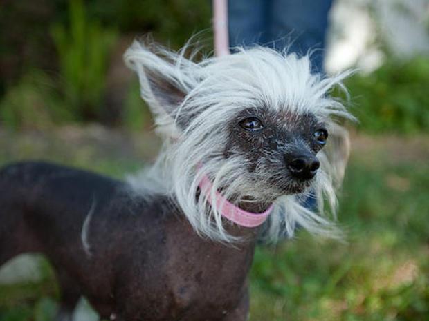 Ugliest Dog Crowned