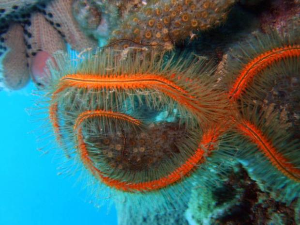The Weirdest Sea Creatures You've Ever Seen