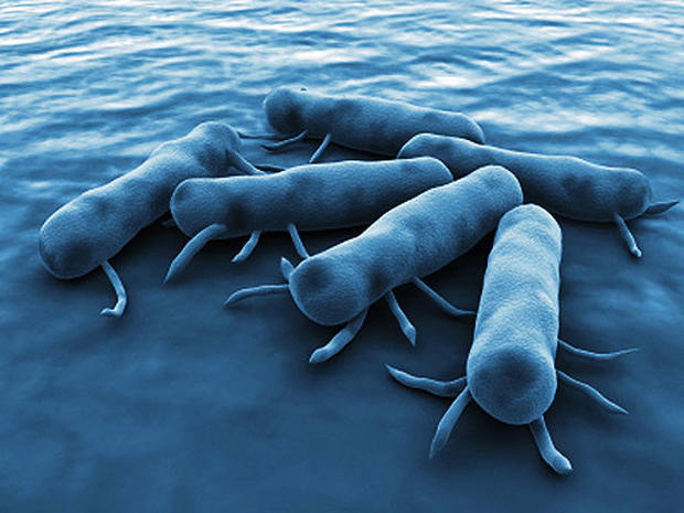 9 Signs of Salmonella Poisoning