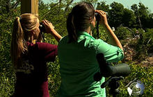 Bird Watchers Compete in Texas