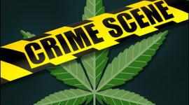 Fatal Car Crash Reveals Maryland Man's Indoor Pot Farm, Say Police