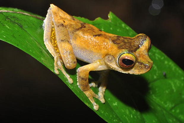 New Animal, Plant Life Discovered on Papua New Guinea
