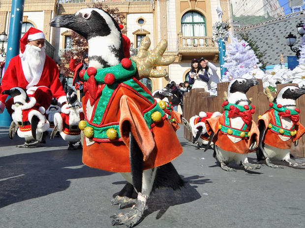 Penguins on Parade
