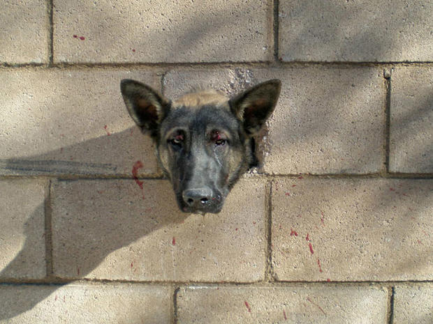 Puppy's Head Stuck in a Wall