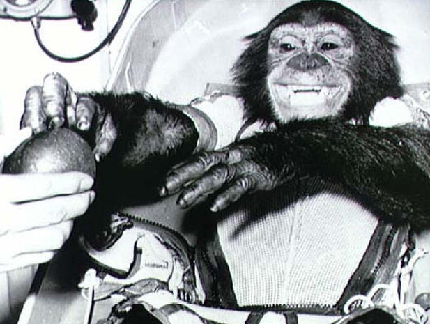 The Legacy of Ham, the Astrochimp