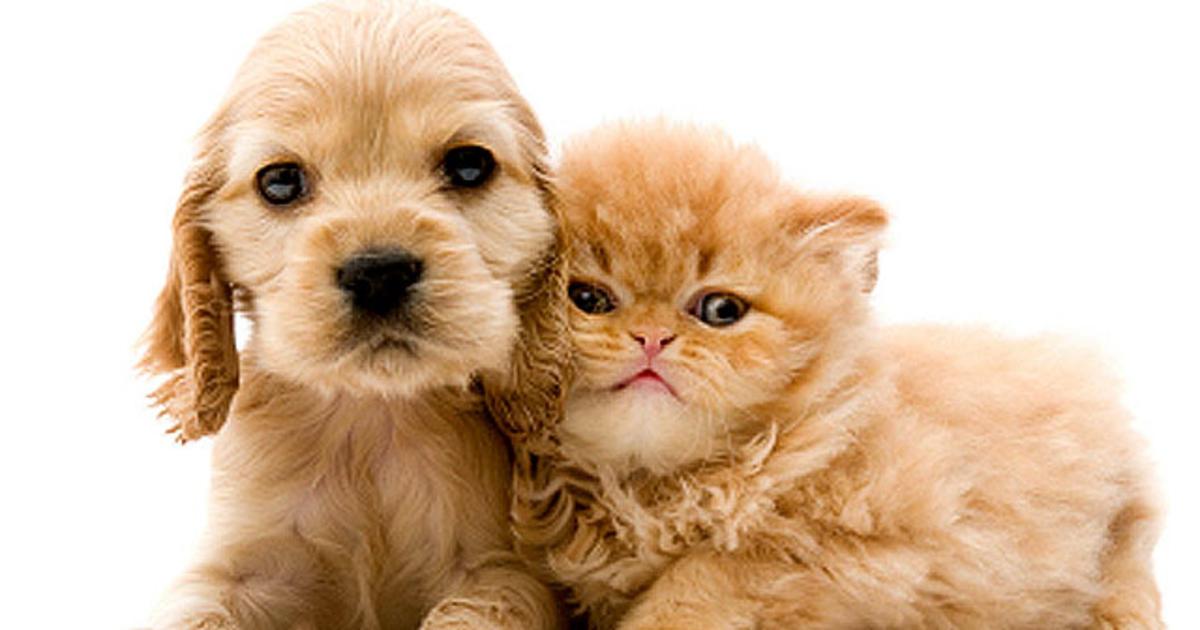 Can Cat Treats Kill A Dog