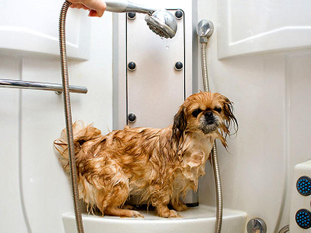 Is Distilled Water Good For Your Dog