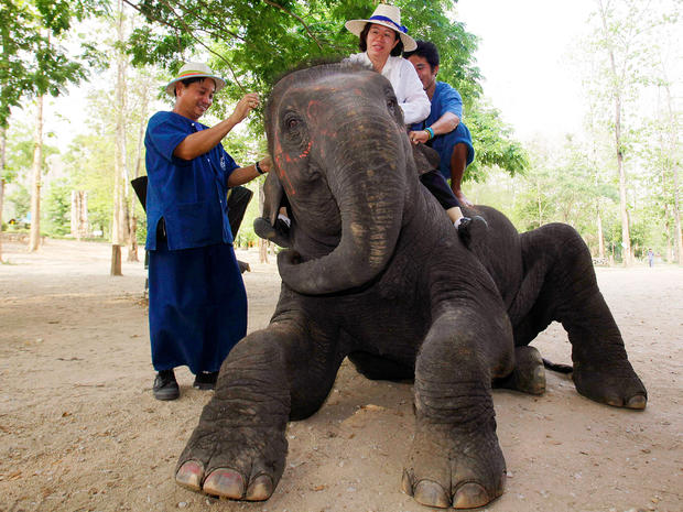 Elephants vs. autism in Thailand