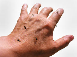 mosquitoes, hand, bugs, skin, stock, 4x3