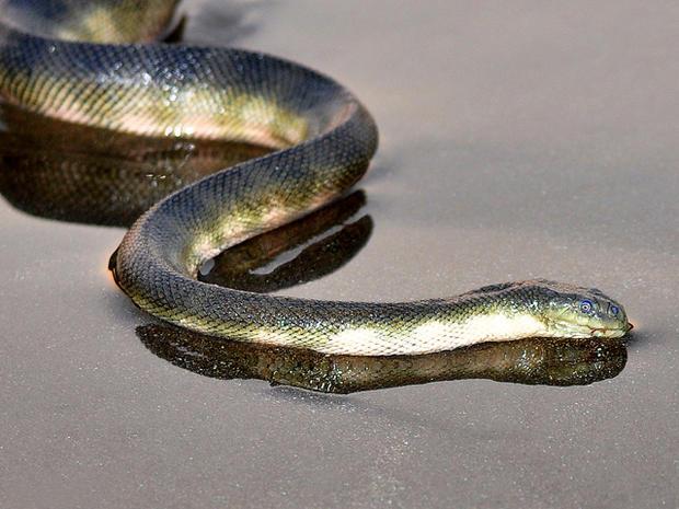 Snake! 15 deadliest serpents