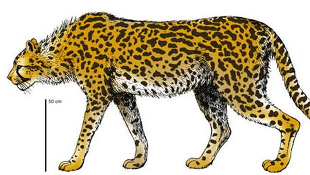 Prehistoric giant cheetah