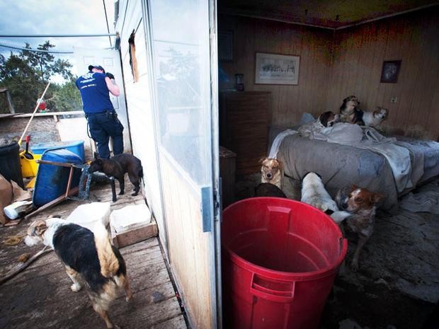 Pet hoarding horrors: 27 photos spotlight cruel disorder