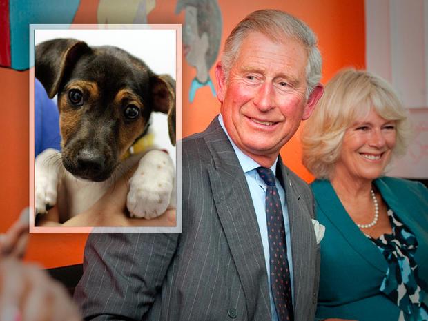 Prince Charles & Camilla's new pet dog